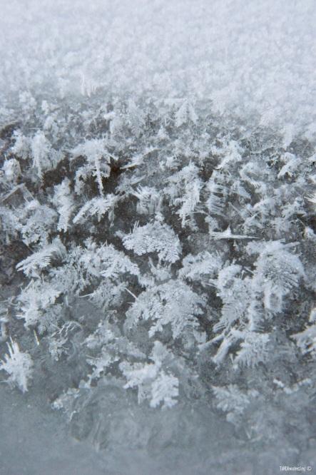 Policeman's Creek Frost