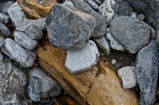 Rocks & Logs