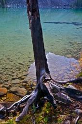 Tree overhanging water