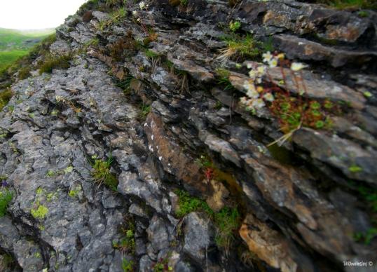 Rocky walkways