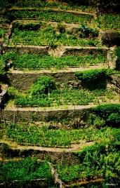Stairway Garden