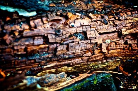 Wet Log